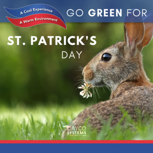 st-patricks-day-custom-design-with-image-of-brown-rabbit-chewing-clover